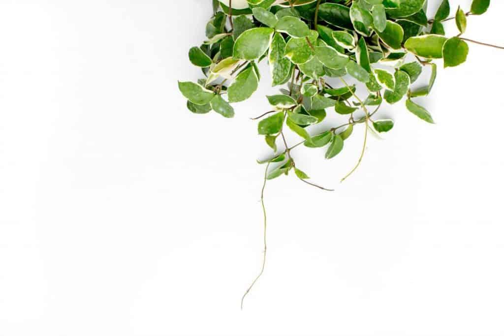 Homemade Miracle Grow Recipe How to Make homemade miracle grow